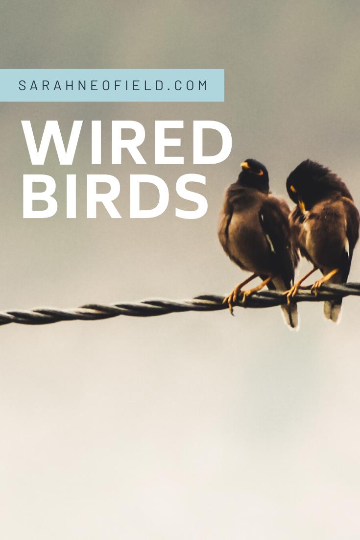 Wired Birds